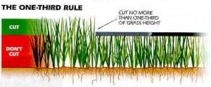 lawn tip